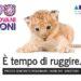 Oltre 200 i progetti candidati a rappresentare i Giovani Leoni al Cannes Lions Festival